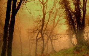 504440_eerie_woods_iii